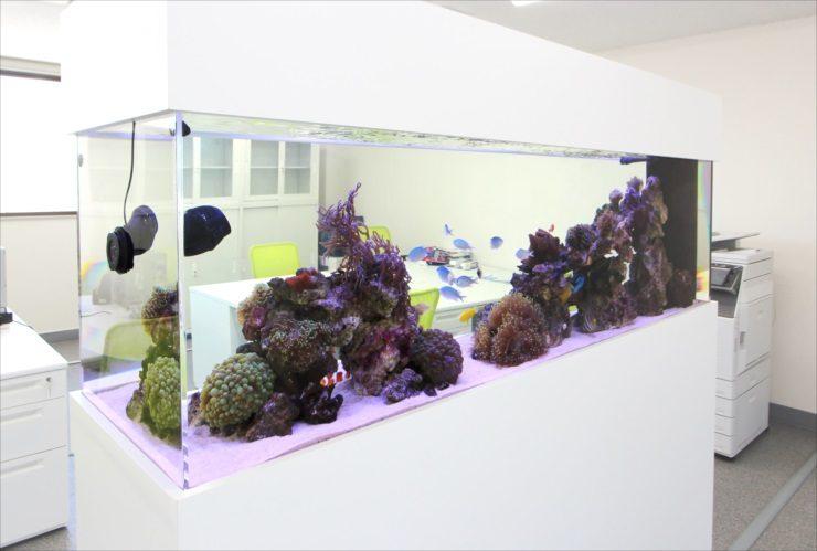 神奈川県 オフィス事務所に設置 大型海水魚水槽 移動事例