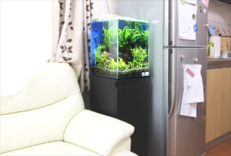 神奈川県 横浜市 個人宅 お試し淡水魚水槽 設置事例 メイン画像
