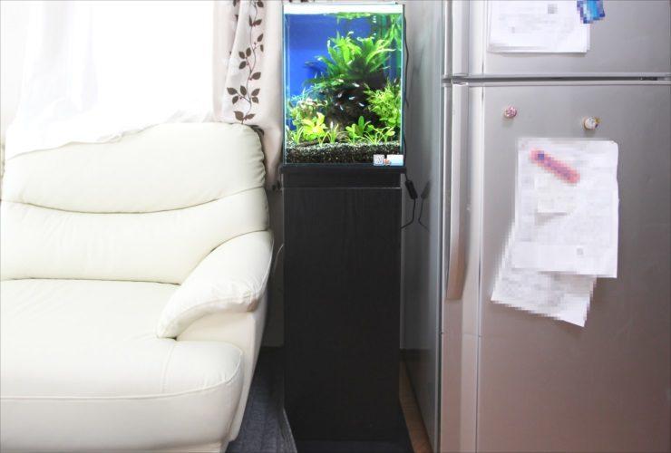 神奈川県 横浜市 個人宅 お試し淡水魚水槽 レンタル事例 水槽画像2