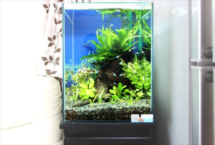 神奈川県 横浜市 個人宅 お試し淡水魚水槽 レンタル事例 水槽画像3