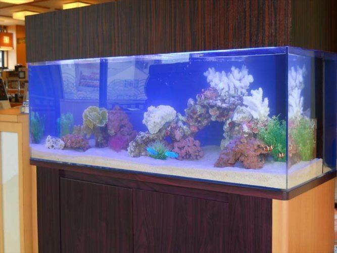 栃木県 飲食店様  120cm海水魚水槽  設置事例 メイン画像