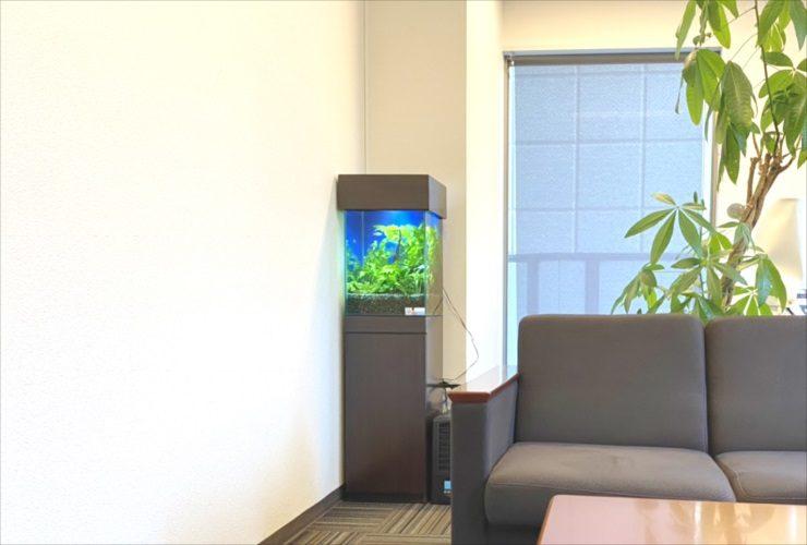 渋谷区 オフィス 30cm淡水魚水槽 設置・メンテナンス事例 メイン画像