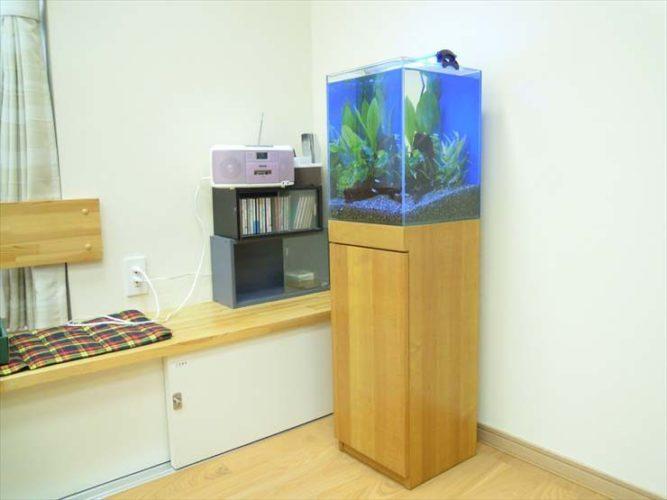 東京都豊島区 施設様  30cm淡水魚水槽  設置事例 水槽写真