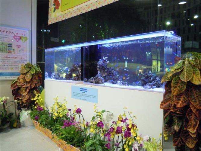 渋谷区 沖縄イベント  水槽設置事例 メイン画像