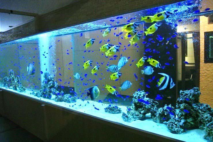 大阪府 中央区 飲食店に設置 超大型!海水魚水槽の事例 メイン画像
