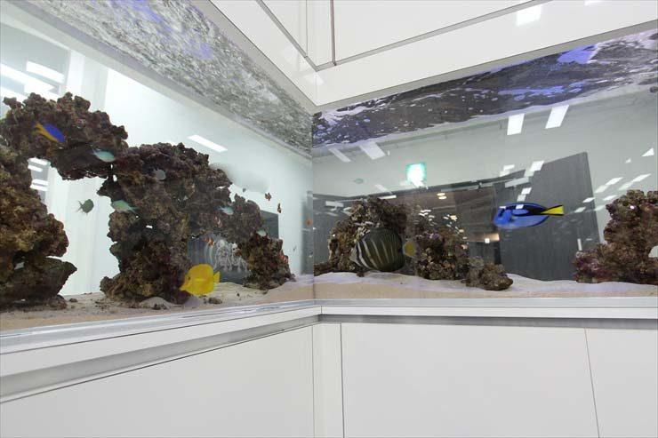 渋谷区 企業様  水槽設置事例 メイン画像