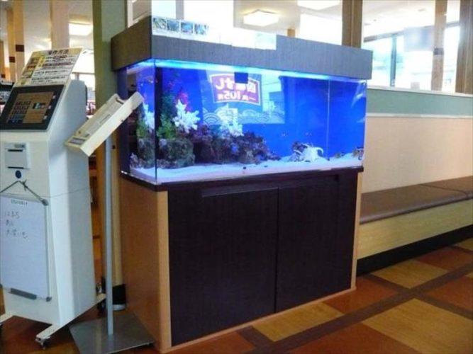 埼玉県さいたま市 飲食店様  120cm海水魚水槽  設置事例 メイン画像