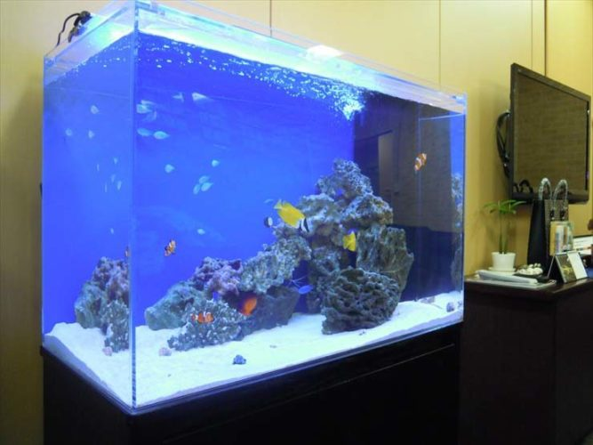 渋谷区 企業様  90cm海水魚水槽  設置事例 メイン画像