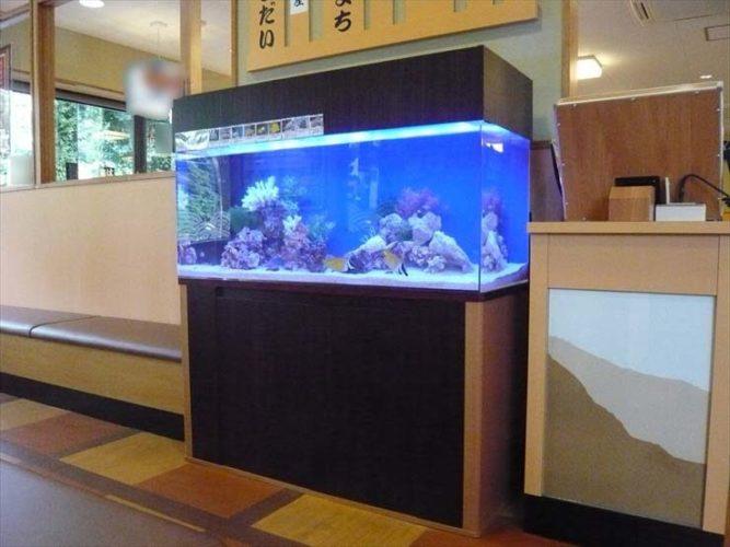 神奈川県綾瀬市 飲食店様  120cm海水魚水槽  設置事例 メイン画像