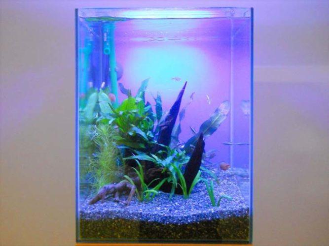 文京区 企業様  30cm淡水魚水槽  設置事例 メイン画像