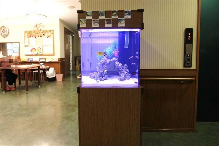 埼玉県さいたま市 施設様  50cm海水魚水槽  設置事例 メイン画像