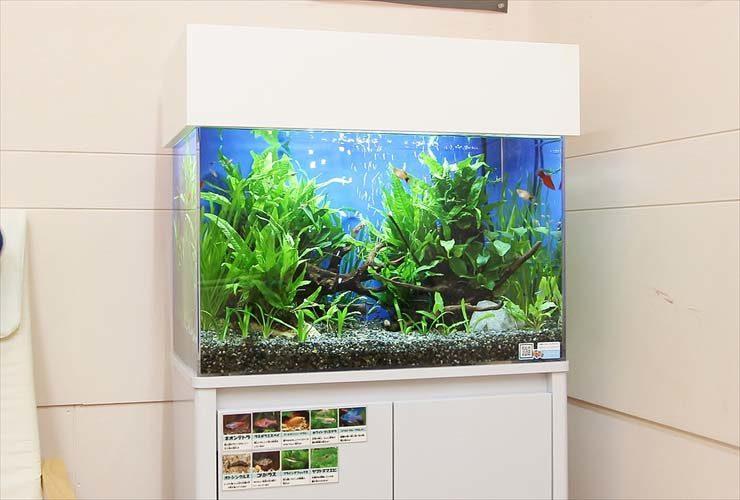 神奈川 歯科クリニック 待合室 60cm淡水魚水槽 設置事例 水槽画像3