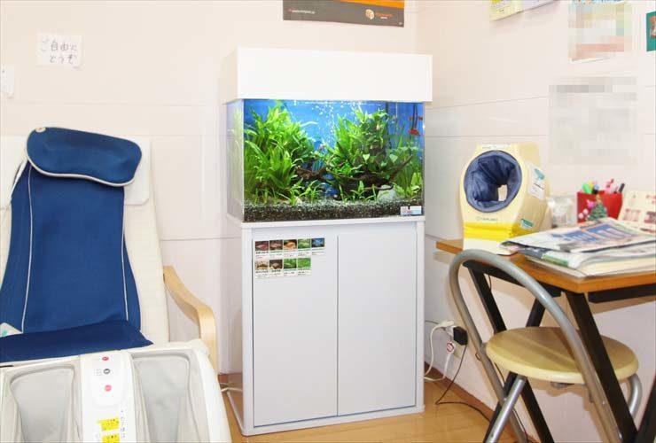 神奈川 歯科クリニック 待合室 60cm淡水魚水槽 設置事例 水槽画像1