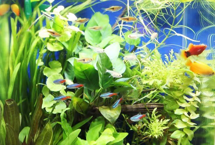 横浜 個人宅 水草アクアリウム お試し水槽の設置事例 水槽画像1