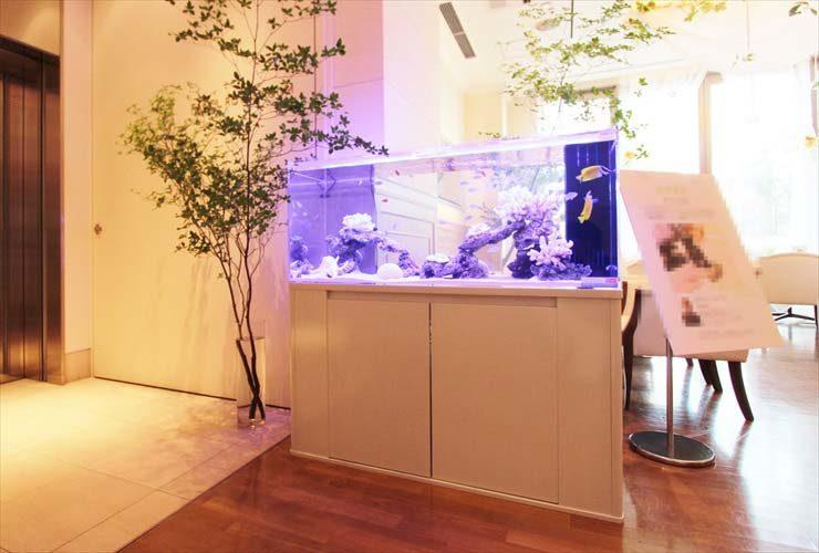 銀座 イベント 大型海水魚水槽 白を基調としたアクアリウム事例 水槽画像1