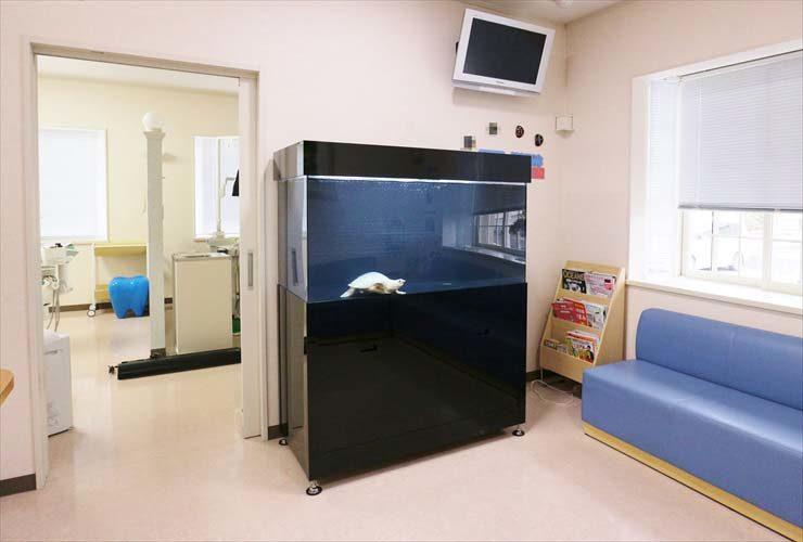 歯科医院の待合室 スッポンモドキ水槽 設置事例 水槽画像1