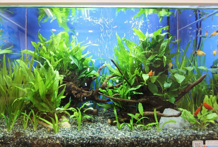 神奈川 歯科クリニック 待合室 60cm淡水魚水槽 設置事例 水槽画像2