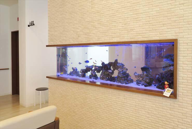 整形外科 待合室 大型海水魚水槽 レイアウトリニューアル事例 水槽画像2