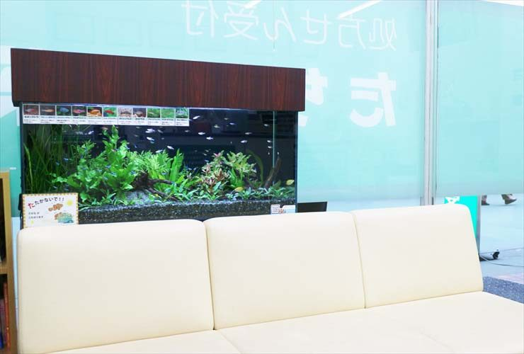 墨田区 薬局の待合室 淡水魚水槽のレイアウトリニューアル事例 水槽画像2