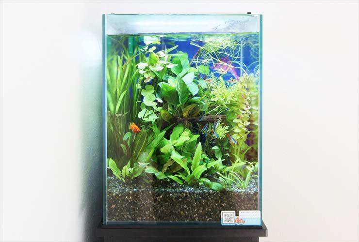 横浜 個人宅 水草アクアリウム お試し水槽の設置事例 水槽画像3