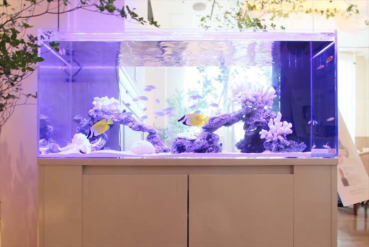 銀座 イベント 大型海水魚水槽 白を基調としたアクアリウム事例 水槽画像3
