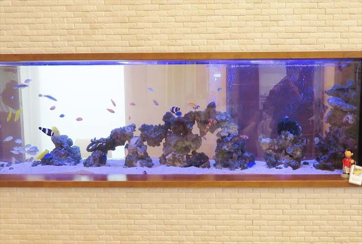 整形外科 待合室 大型海水魚水槽 レイアウトリニューアル事例 水槽画像3