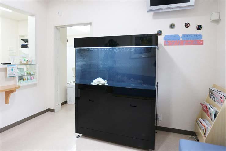 歯科医院の待合室 スッポンモドキ水槽 設置事例 水槽画像3