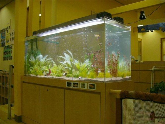 神奈川県横浜市 幼稚園様  150cm淡水魚水槽  設置事例 メイン画像