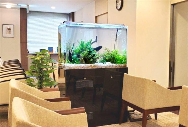 検診センターに設置した90cm淡水魚水槽 その後