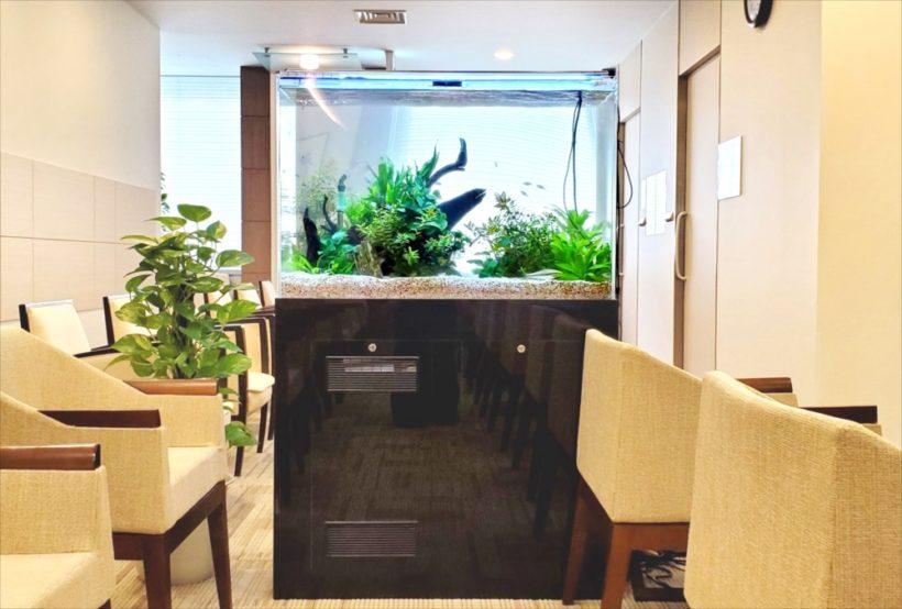 検診センターに設置した90cm淡水魚水槽 その後 水槽画像2