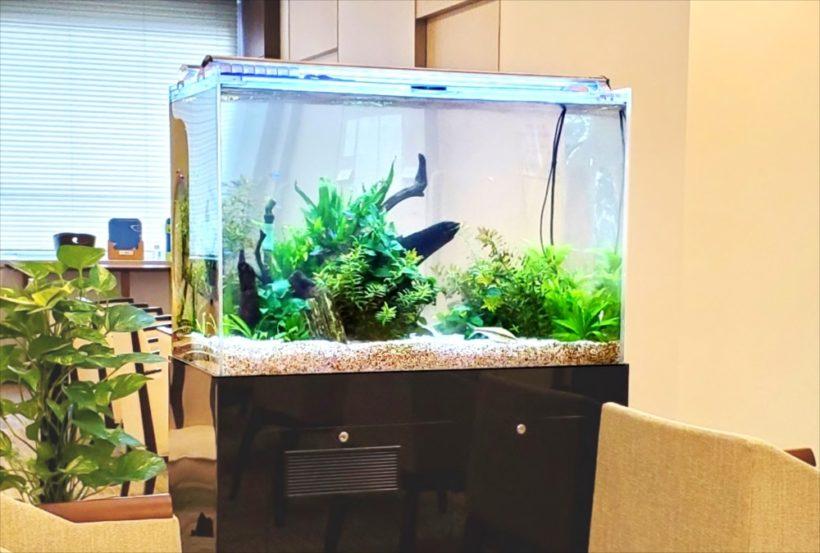 検診センターに設置した90cm淡水魚水槽 その後 水槽画像4