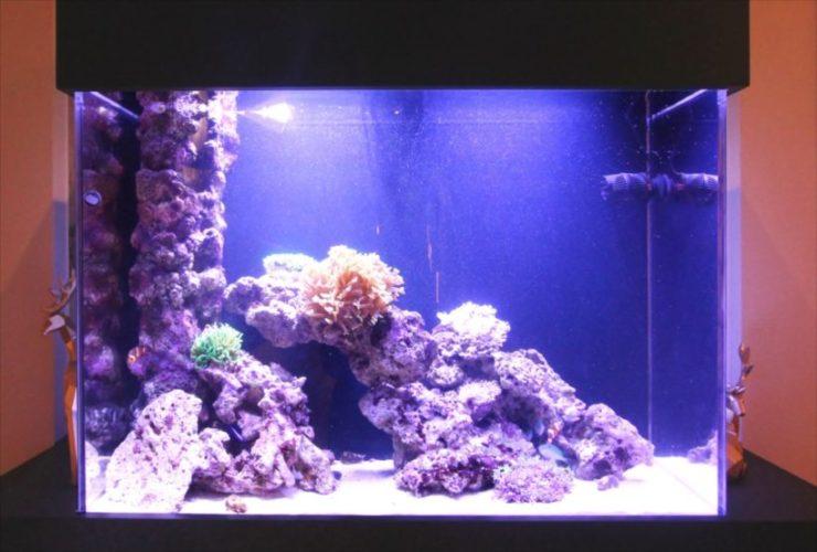 個人宅 サンゴ水槽 販売・設置・メンテナンス事例 メイン画像