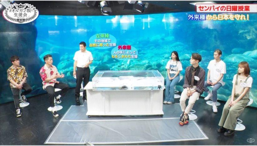 動画配信 撮影スタジオ タッチプール 短期レンタル事例 水槽画像3