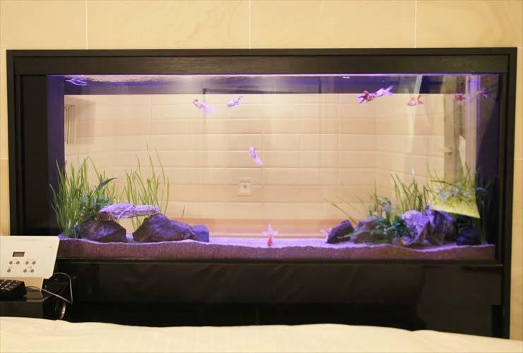 はめ込み型アクアリウム 金魚水槽 リニューアル写真4