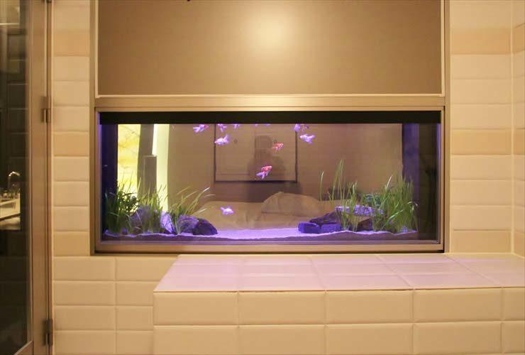 はめ込み型アクアリウム 金魚水槽 リニューアル写真6