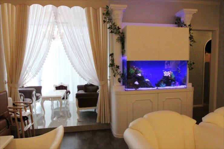 カフェの海水魚水槽
