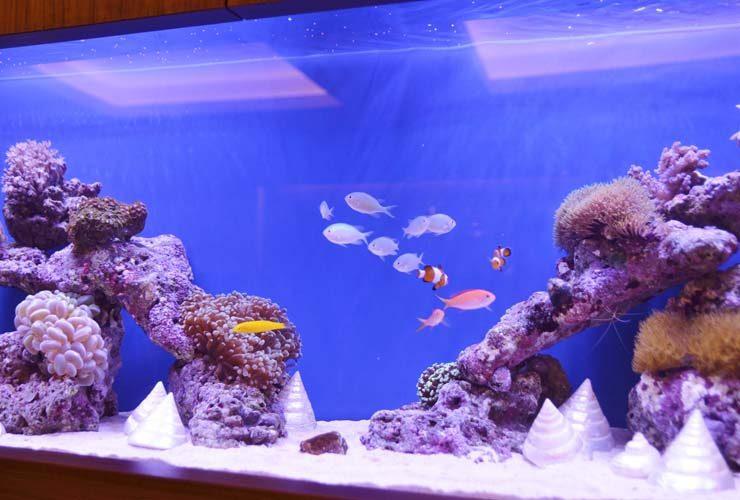 横浜 美容クリニック 待合室 120cm海水魚水槽 設置事例