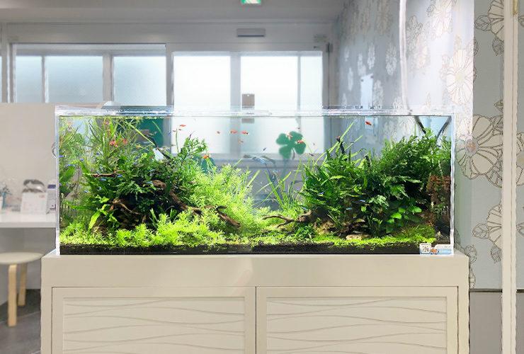 淡水魚水槽のレンタル・リース