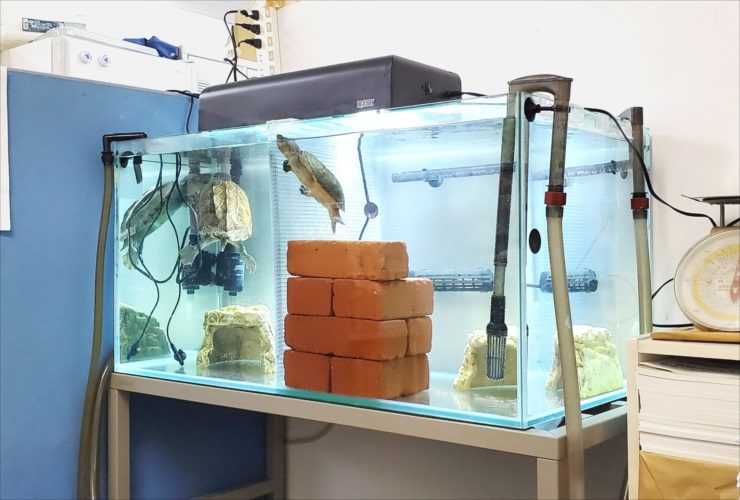 文京区 オフィス事務所 カメ水槽 メンテナンス事例 メイン画像
