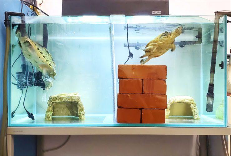 文京区 オフィス事務所 カメ水槽 メンテナンス事例 水槽画像2