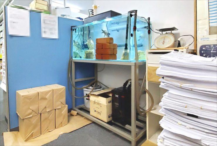 文京区 オフィス事務所 カメ水槽 メンテナンス事例 水槽画像3