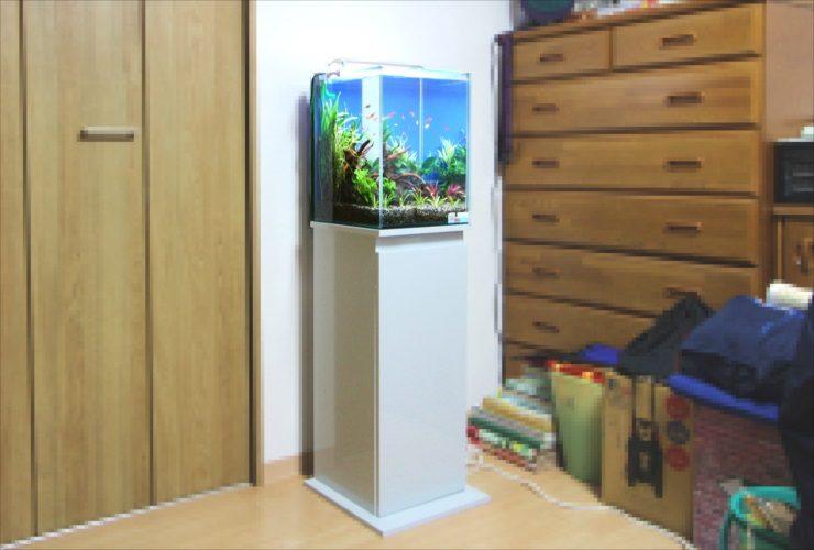 神奈川県 横浜市 個人宅 30cm淡水魚水槽 設置事例 メイン画像