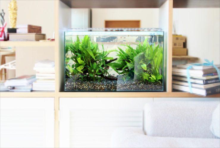 ドラマ撮影 60cm淡水魚水槽 短期レンタル事例 水槽画像1