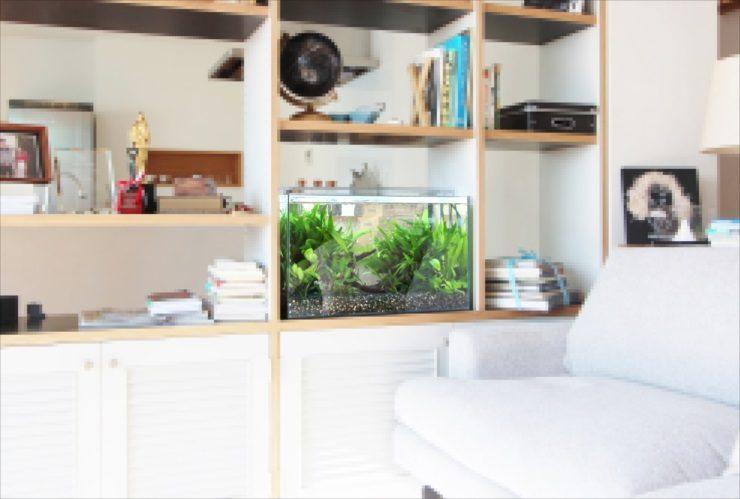 ドラマ撮影 60cm淡水魚水槽 短期レンタル事例 水槽画像2