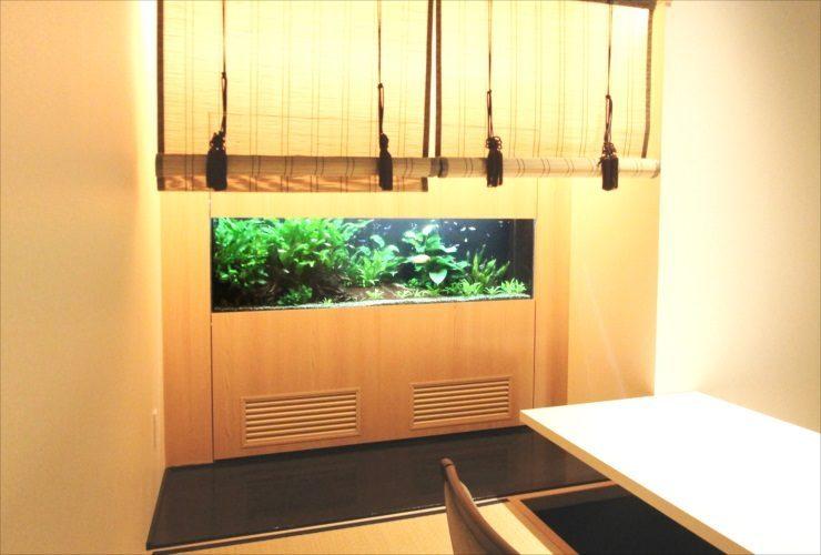 日本料理「魚月」様 150cm淡水魚水槽設置 その後 水槽画像3