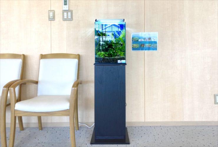 介護付き有料老人ホーム 30cm淡水魚水槽 お試し設置 水槽画像2