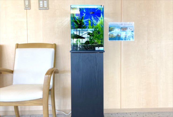 介護付き有料老人ホーム 30cm淡水魚水槽 お試し設置 水槽画像4