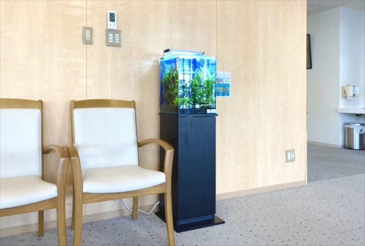 介護付き有料老人ホーム 30cm淡水魚水槽 お試し設置 水槽画像5