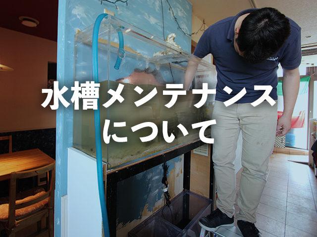 お客様の水槽メンテナンスにも伺います!訪問時に確認するポイントを大公開のサムネイル画像
