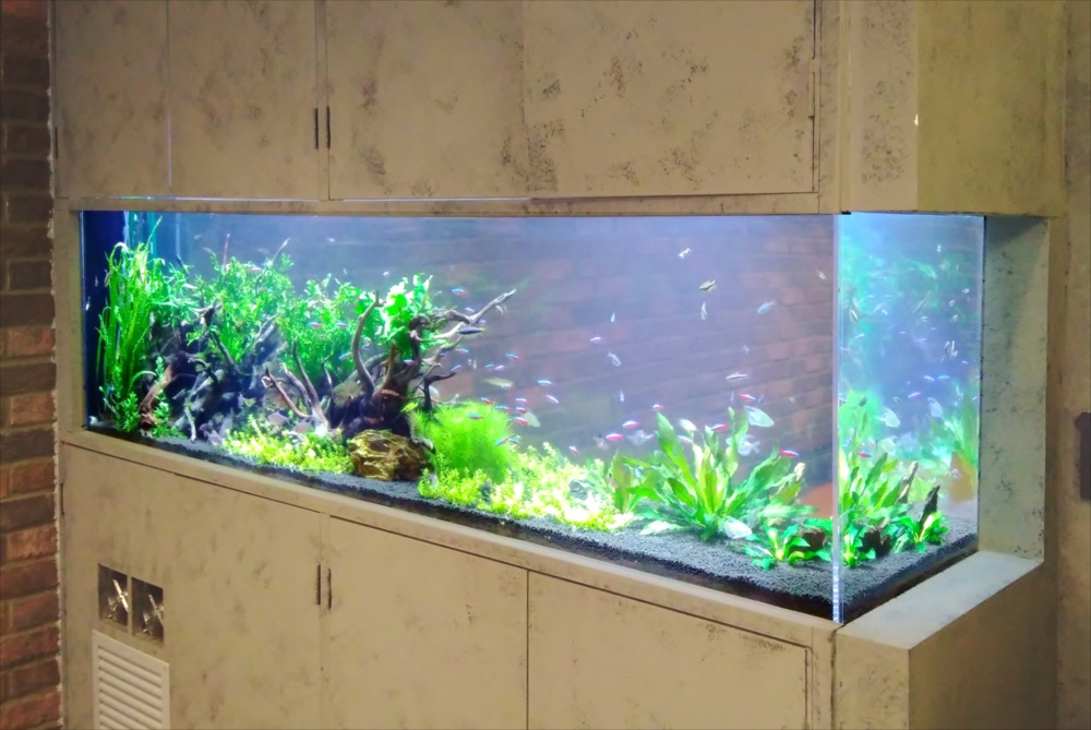渋谷区 オフィス 大型淡水魚水槽 リース事例 その後 メイン画像